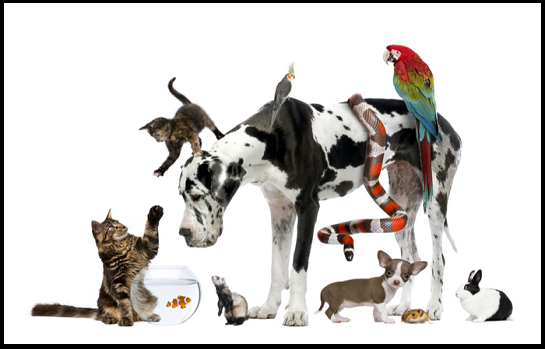 Traveling Pets, Ages 3 and older with a parent/caregiver