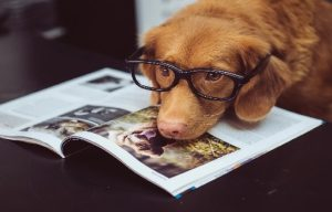 dog with head on book and eye glasses