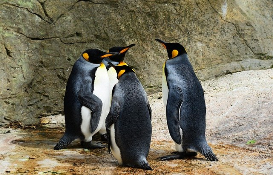 Dynamic Kids of New York: Penguins, Pre-K Ages 3-5 years