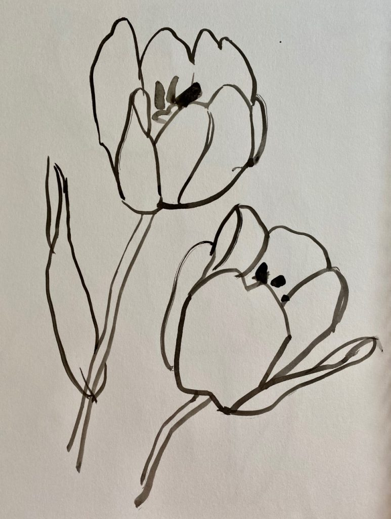 Line Drawing - Tulips - Patti Gural