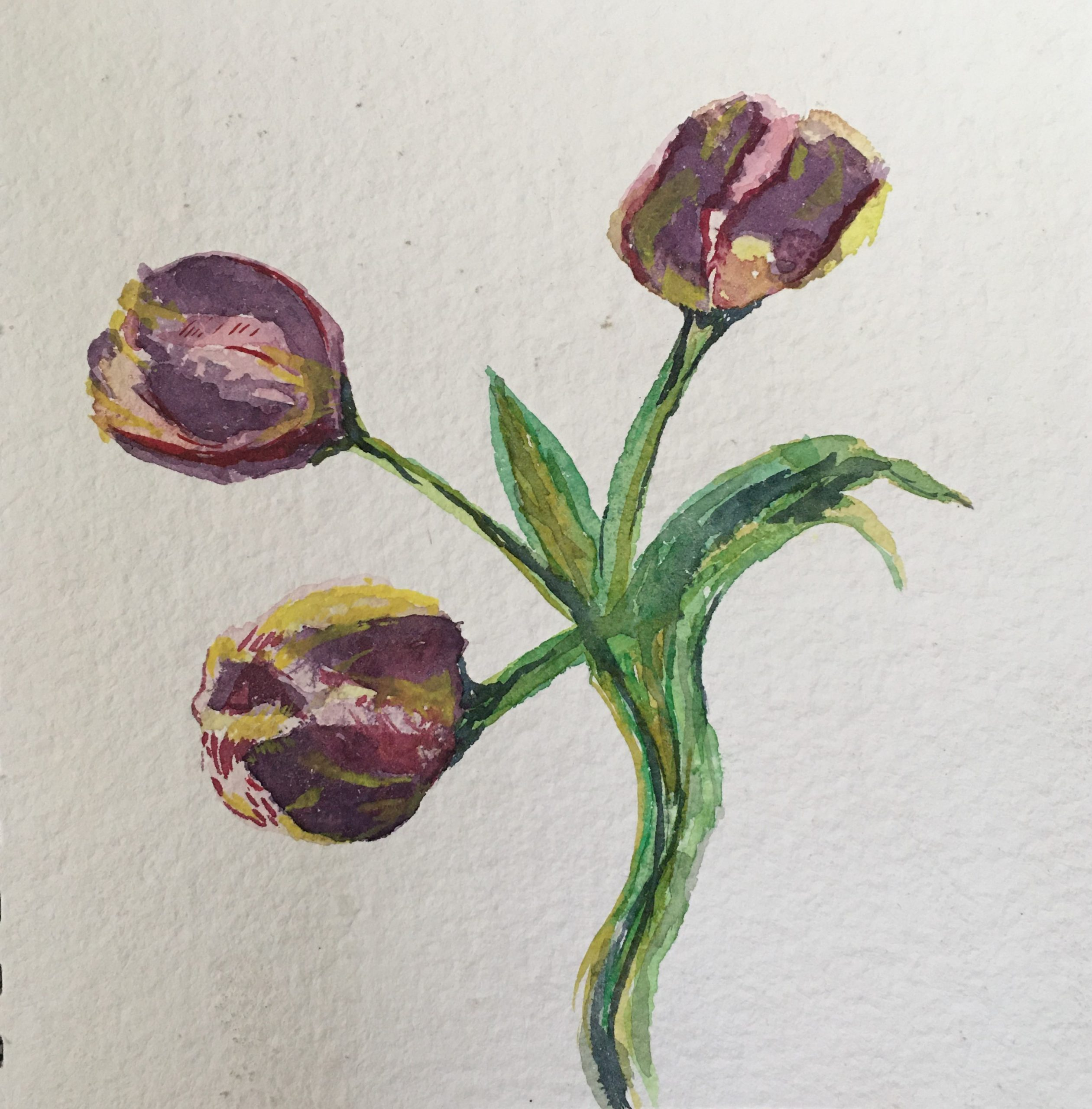 Art For Now - Tulip Sketch