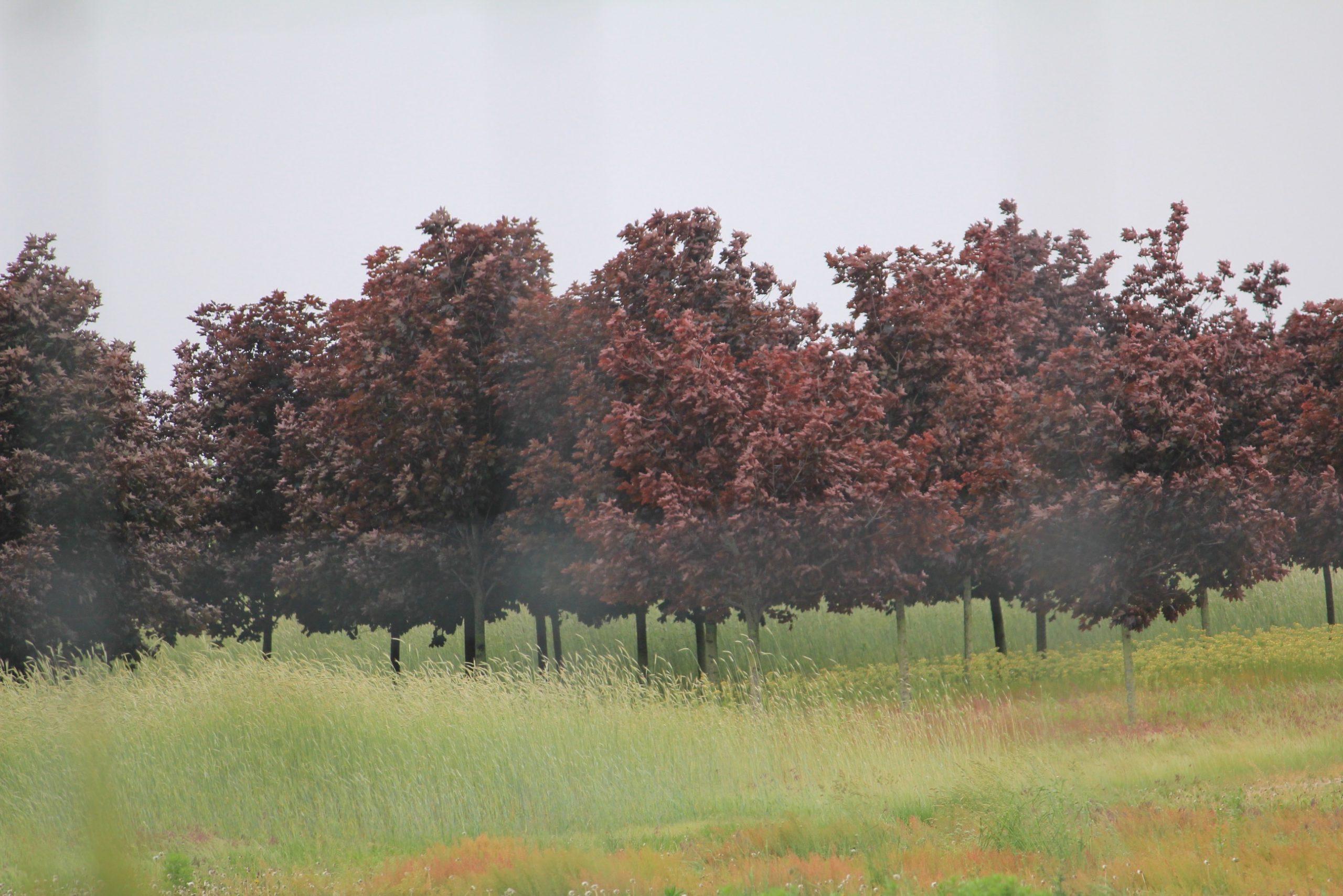 Blurry Trees - Lorena Doherty