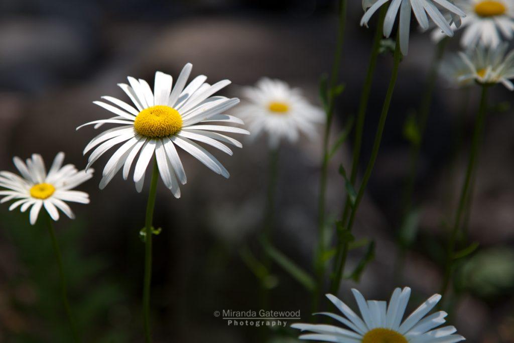 Photography By Miranda Gatewood