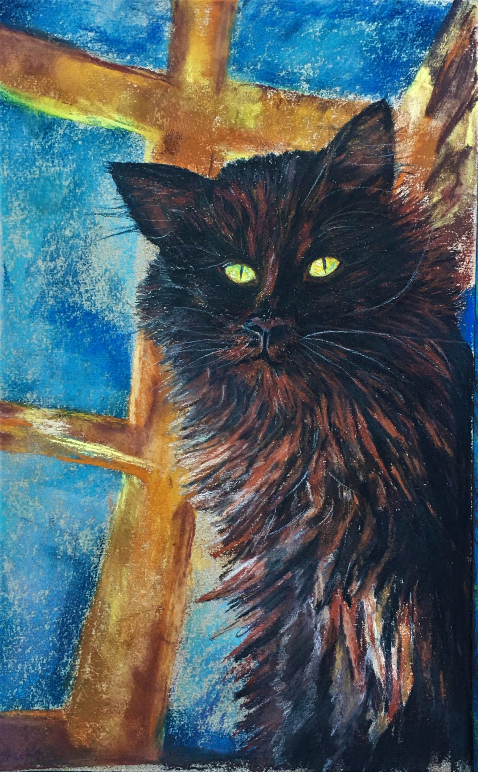 Midnight Cat in Daylight, By Lorena Doherty