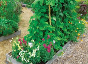 Garden with different types of flowers