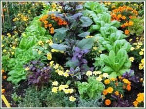 garden with all different flowers grouped together