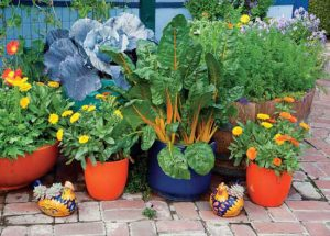 flowers and vegetable plants in pots