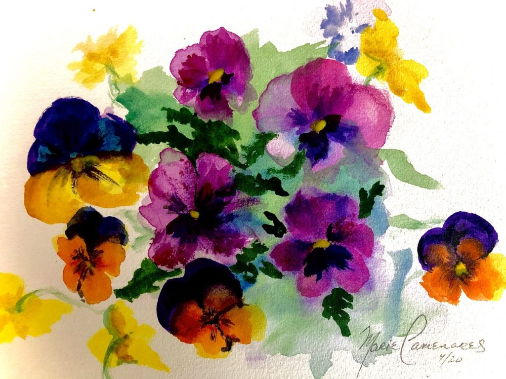 Pansy by Maire Camenares